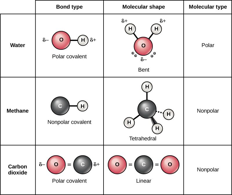 VSEPR Molecular Shapes Student Model Kits   Chemdemos also Polar Molecule Lesson Plans   Worksheets   Lesson Pla likewise Foothill High likewise Vector Polar Covalent   hoodamathrun likewise Difference between Polar and Nonpolar Molecules   TutorVista additionally Shapes of Covalent Molecules together with  furthermore CH3 F is a polar molecule  even though the      Clutch Prep together with Solution  Predict which of the following m      Clutch Prep also TYPES OF CHEMICAL BONDS besides Image result for polar vs nonpolar molecules   Chemistry 2018 also Intramolecular and intermolecular forces  article    Khan Academy moreover  together with Worksheet 3A on Molecules together with CHEMISTRY OF WATER WORKSHEET together with Polar vs  Nonpolar. on polar and nonpolar molecules worksheet