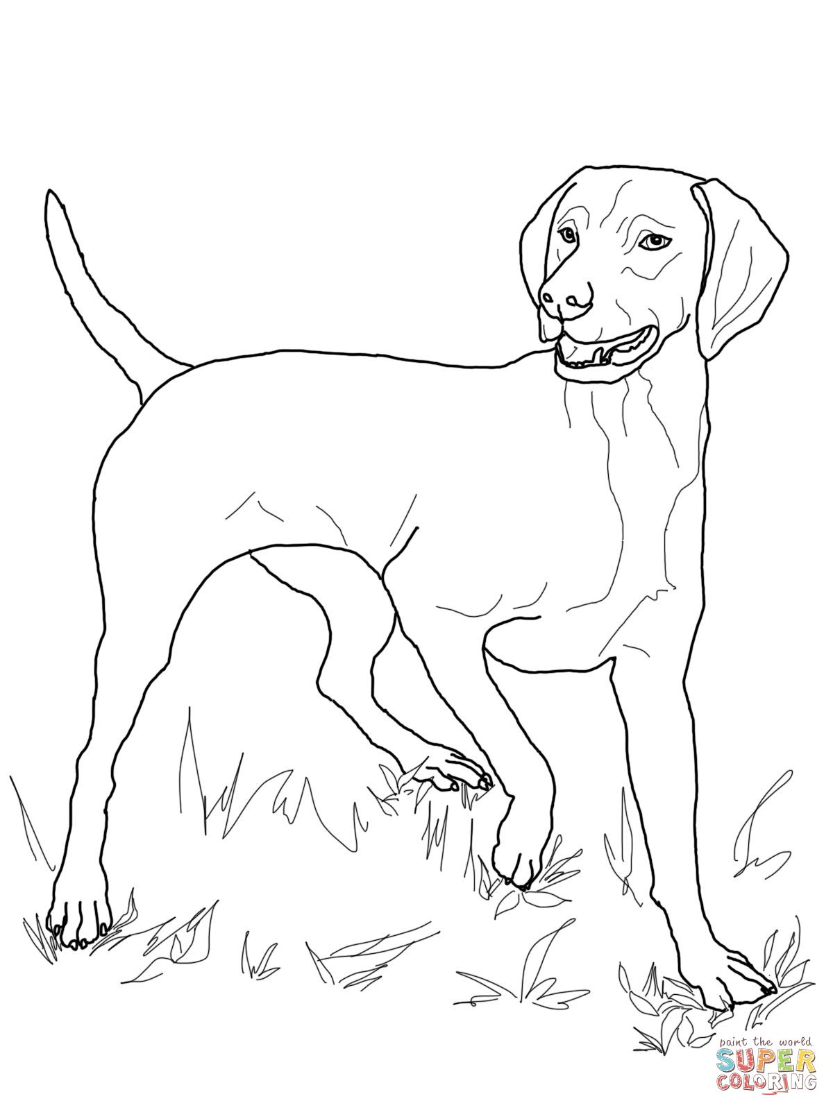 Vizsla | Super Coloring | Dog coloring page, Vizsla, Puppy ...