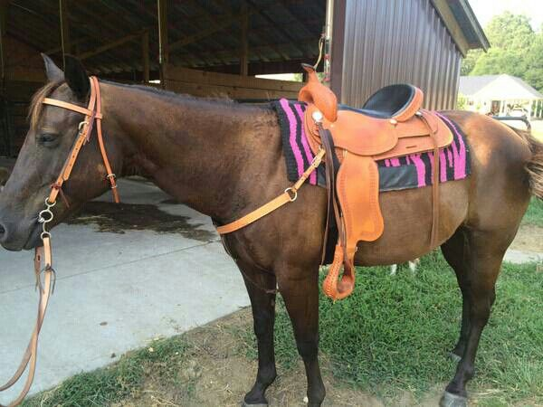 Barrel Trail Horse For Sale Nc Craiglist Horses For Sale