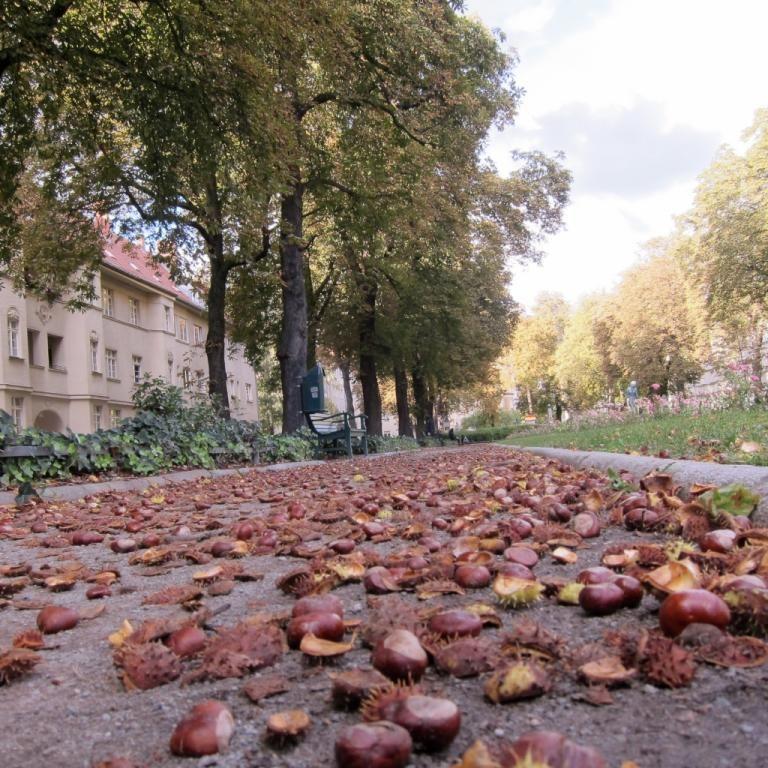 Herbst in Berlin mit Kastanien und Sonnenschein WG-Zimmer in