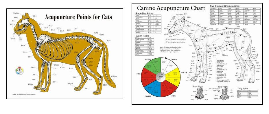 Acupuncture - Cats & Dogs | Acupuncture, Accupuncture ...
