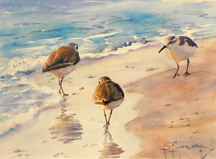 Sanderlings on the Beach web.jpg (880×648) | WATERCOLORS | Pinterest ...