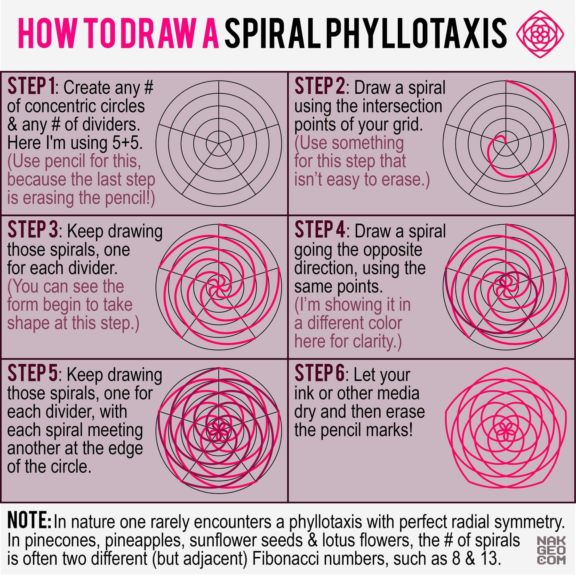 How To Draw A Spiral Phyllotaxis