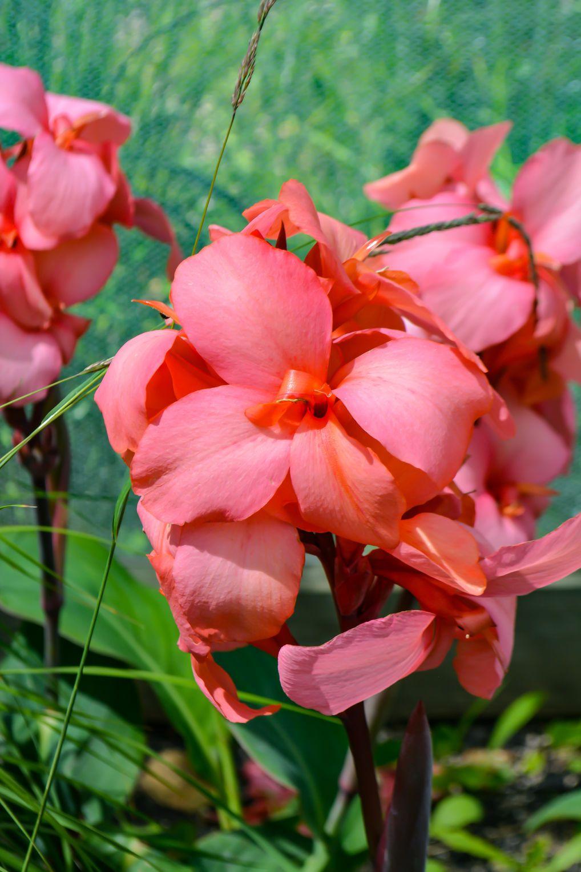 Pinkish Orange Flower Photos By Me Photos By Me Cause Im