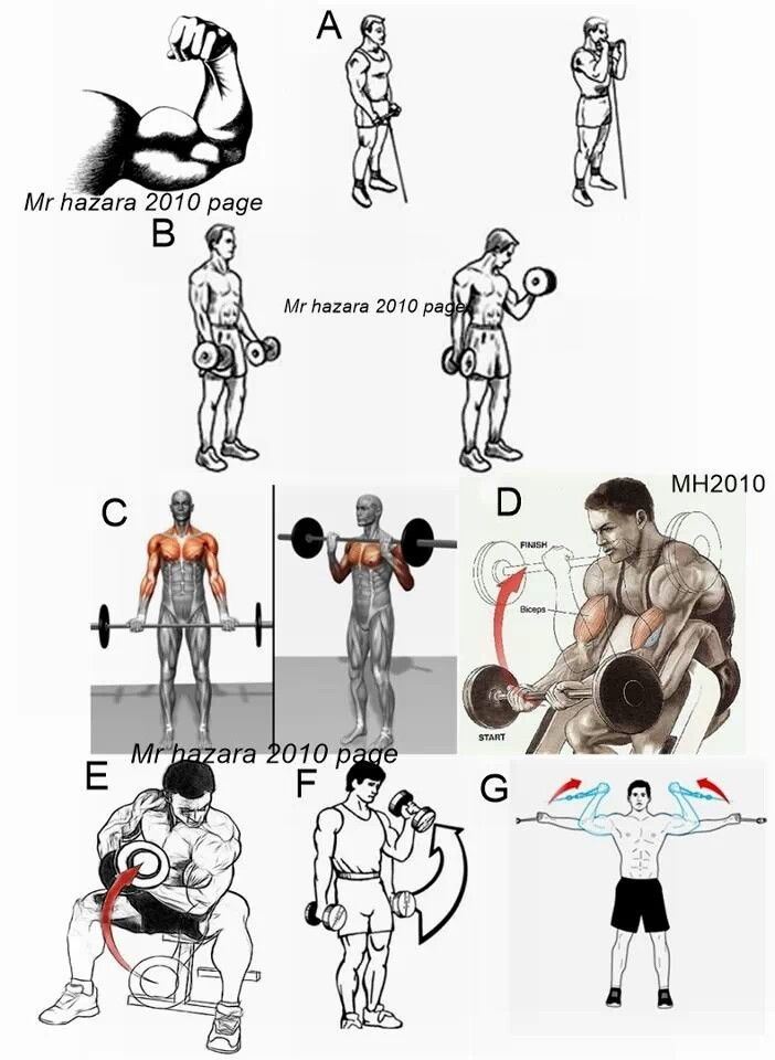 Bicep workout also karate pinterest biceps and rh