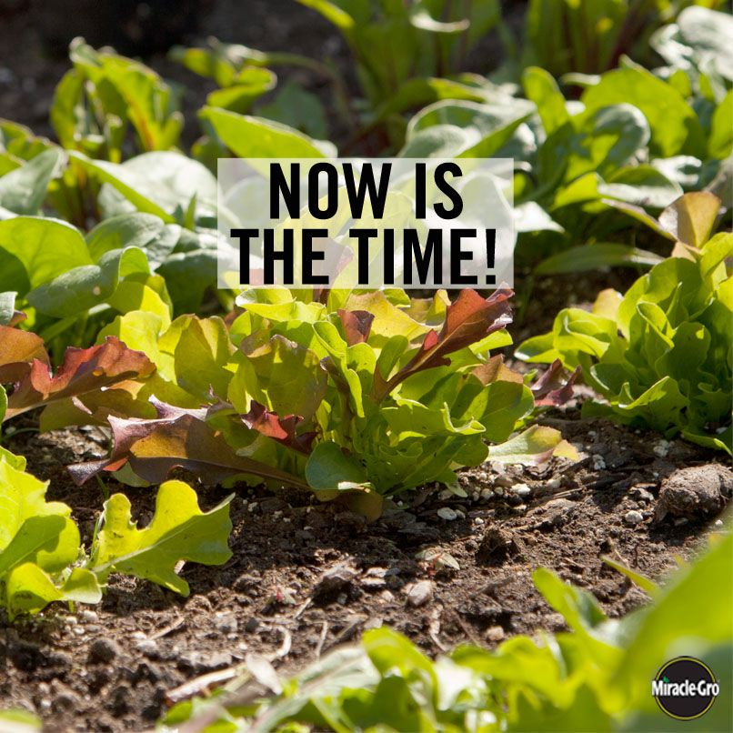 Get Growing! Plant Now For A Fall Harvest. #Vegetable