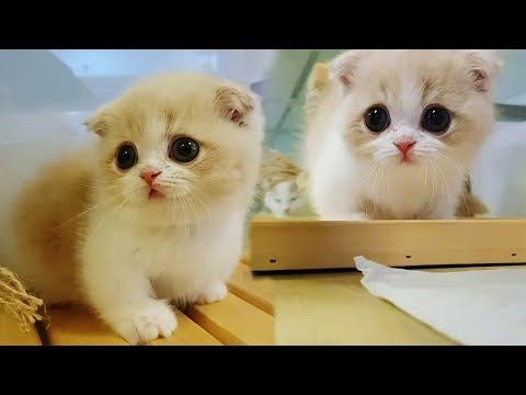 Pin By Cutekittensvideos On Cute Kittens Videos Pinterest