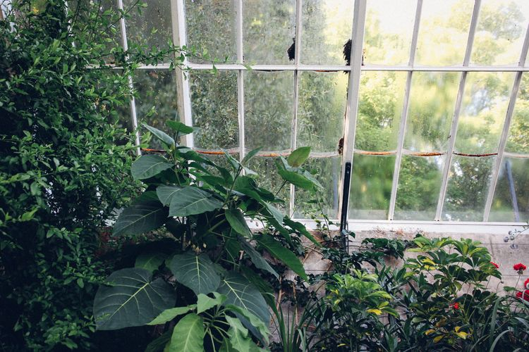 Wallington Gardens | carolyn carter  #nationaltrust