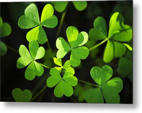 Green Clover Metal Print by Christina Rollo.  All metal prints are professionally printed, packaged, and shipped within 3 - 4 business days and delivered ready-to-hang on your wall. Choose from multiple sizes and mounting options.