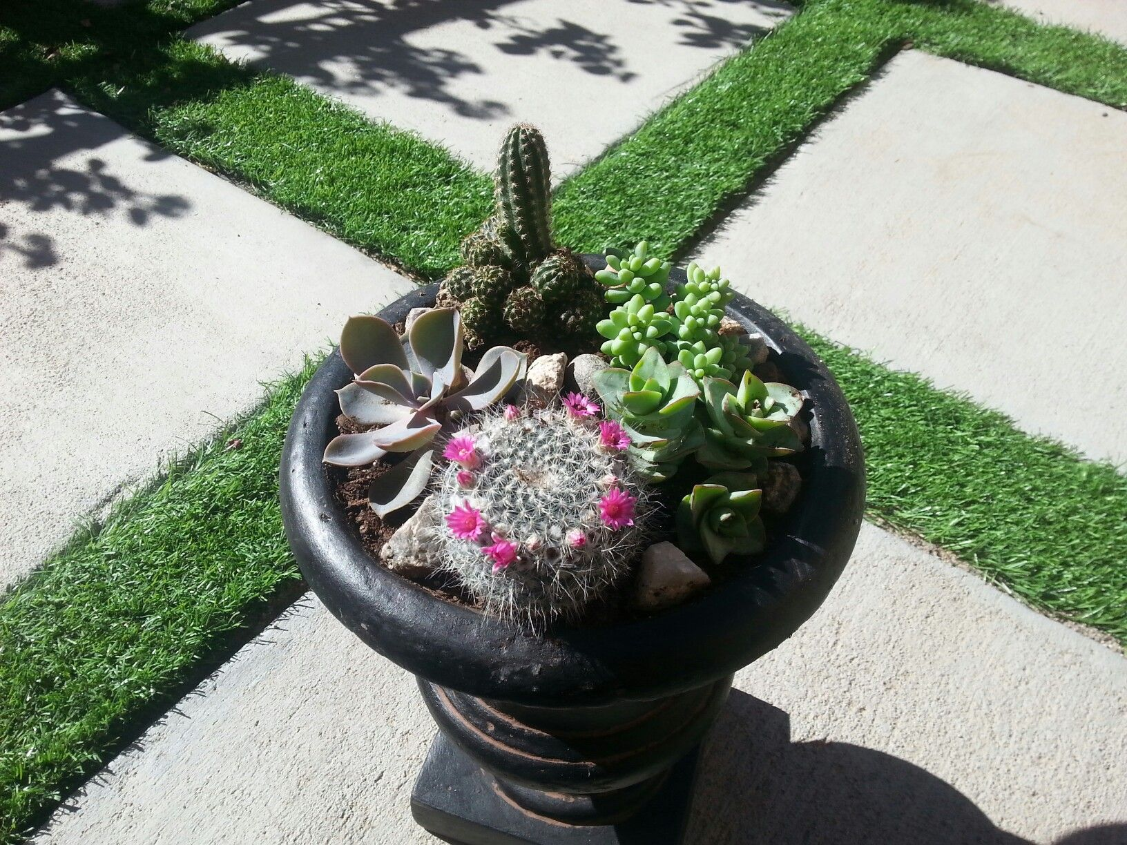 Cute mini cactus garden-- VERY easy to create and take care of!🌵