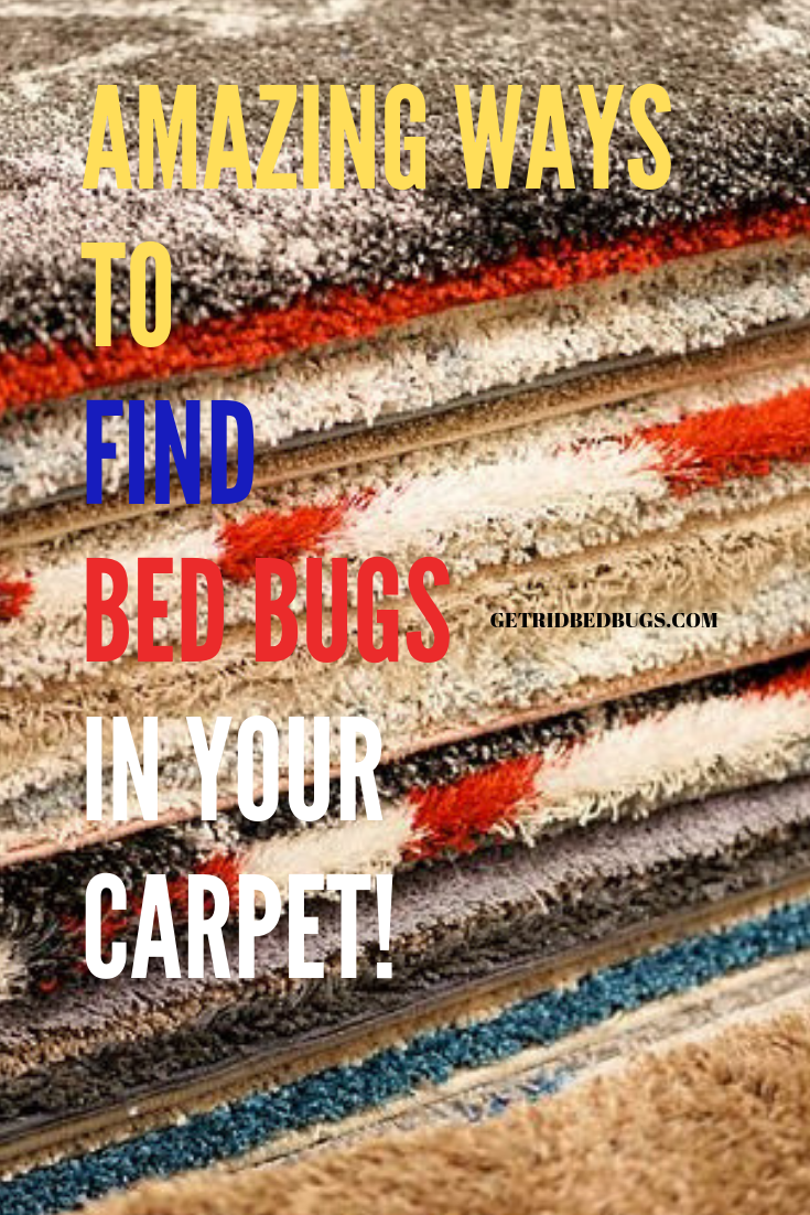 Bed Bugs Carpet Stay Calm And Read These Tips (With images