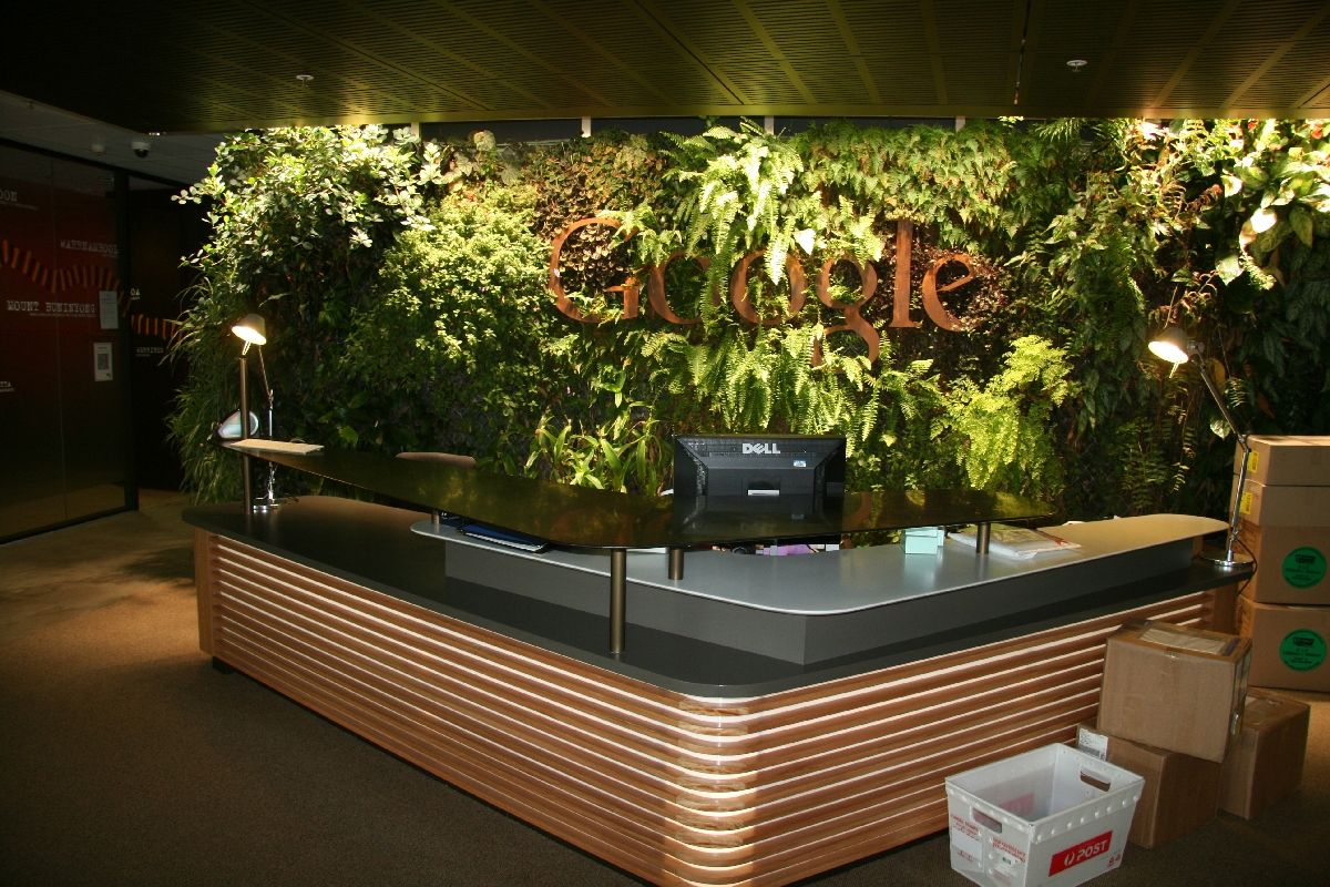 google office environment. Office Plants Plays Major Role In Active Work Environment Google