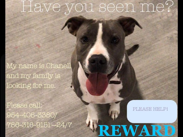 Missing from North Miami, FL. Losing a pet, Dog cat