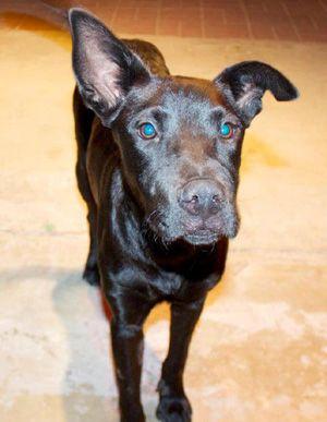 Barrio Dogs Adopt023phoebe Pet Adoption Sick Dog Dogs