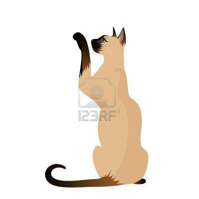 Beautiful Siamese cat Stock Photo - 7048445