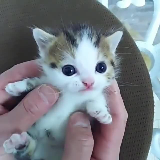 Good morning, kitten! Photo credi Cute cats and kittens
