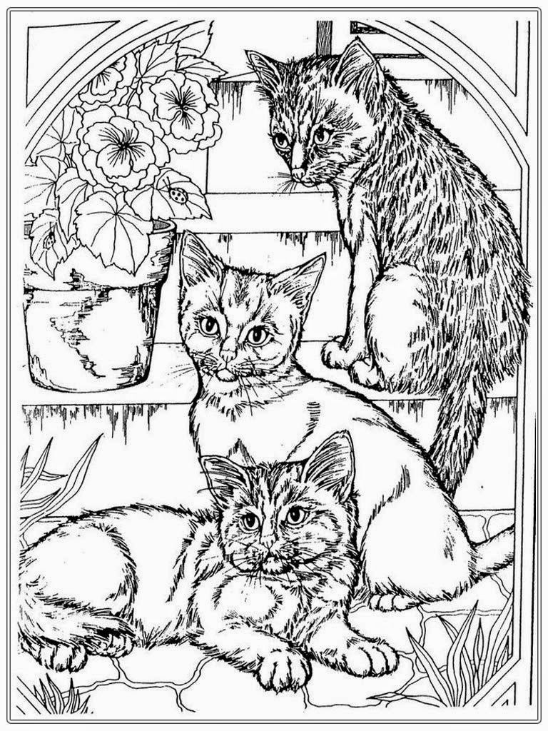 Free cat coloring pages for adult coloring animals pinterest