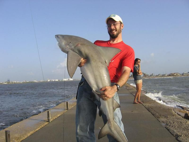 Blacktip shark at surfside jetty 2coolfishing fishing for Fishing galveston tx