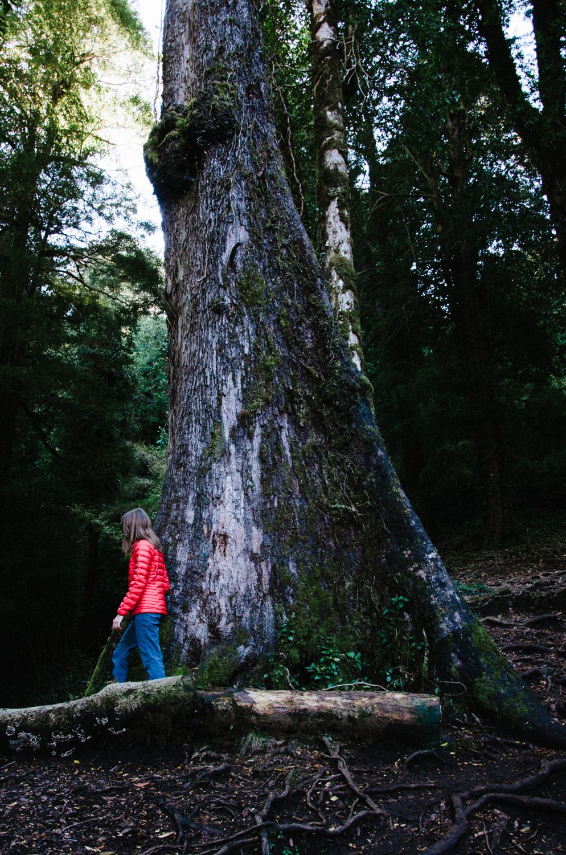 Parque Nacional Huerquewue, Chile | Coats & Kahvi