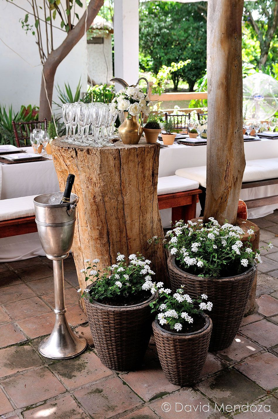 Vintage champagne bar on an old log