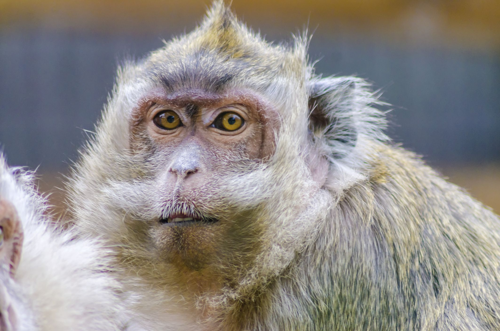 Primate CRO Alpha Genesis Again Exhibits Highest Standards