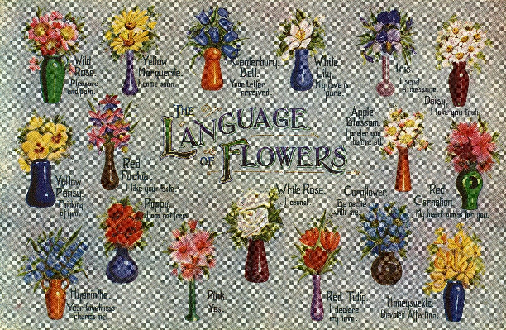 Flower Meanings The Language of Flowers Flower meanings