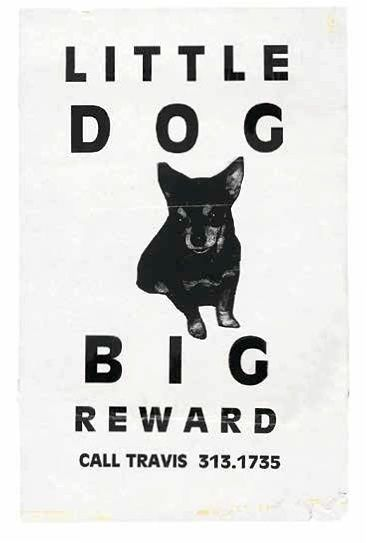 Weird and wonderful missing pet posters – in pictures