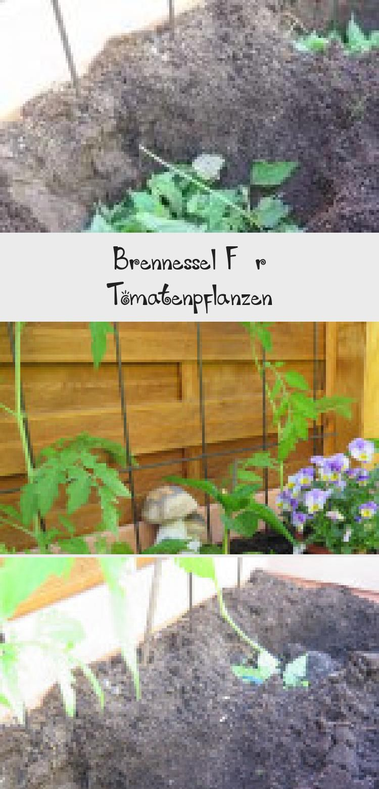 Brennessel Fur Tomatenpflanzen Brennessel Als Naturlicher Dunger Und Zum Warmen Brennesseln Gibt Es Uberall Trockn In 2020 Tomatenpflanzen Pflanzen Garten Pflanzen
