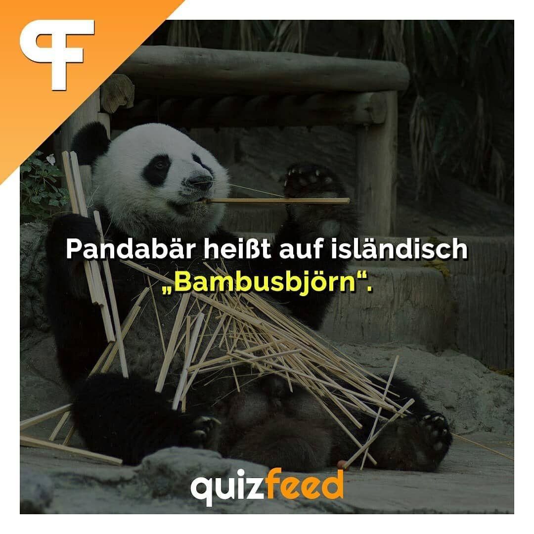 Pandabar Heisst Auf Islandisch Bambusbjorn Wissen Clever Verpackt