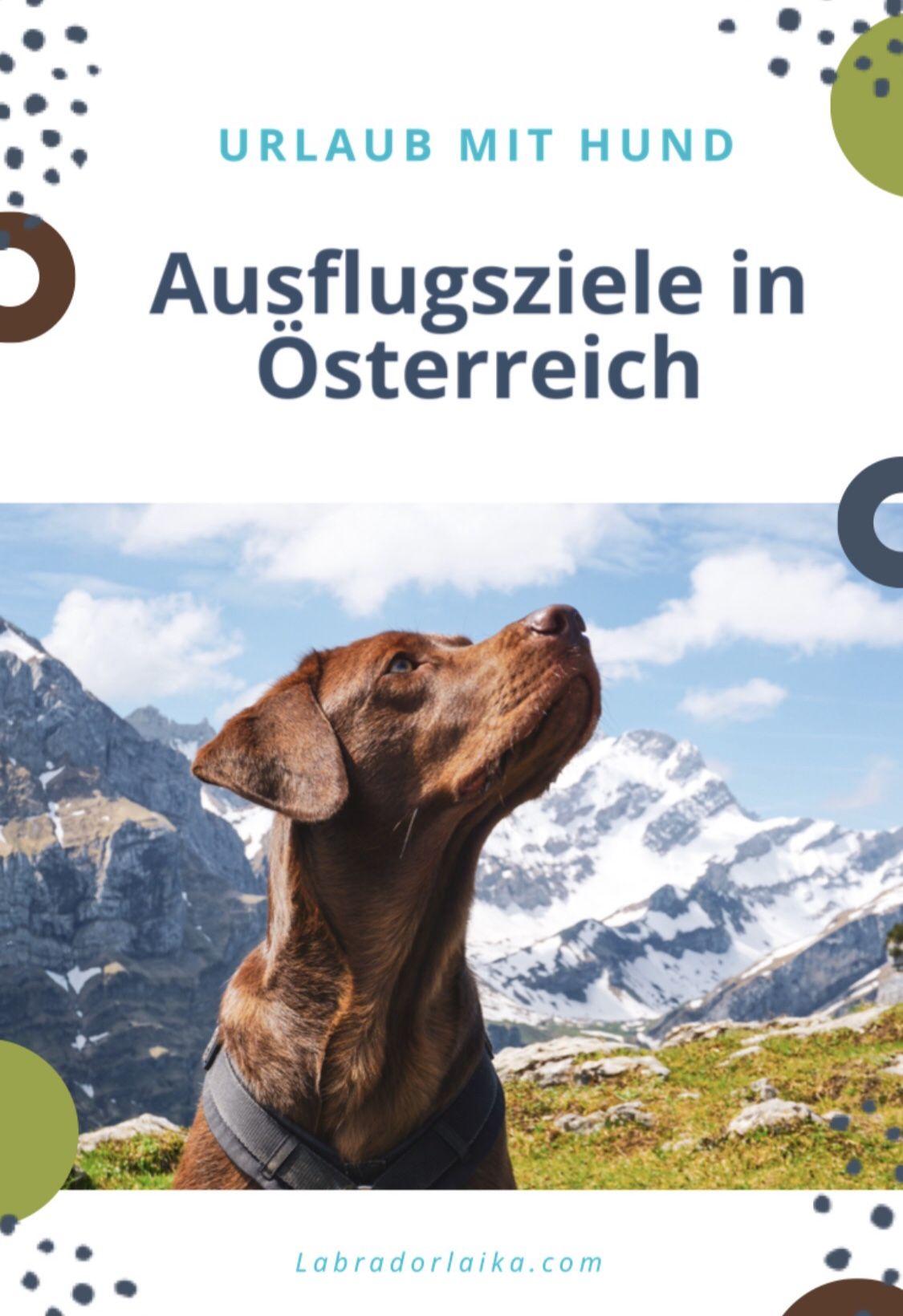 Urlaub Mit Hund Ausflugsziele In Osterreich Midoggy Community In 2020 Urlaub Mit Hund Urlaub Mit Hund Osterreich Urlaub