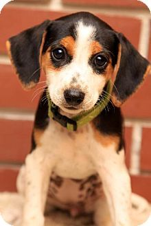 Mini Pinscher Rat Terrier Mix 300 Puppies Pinterest Puppies