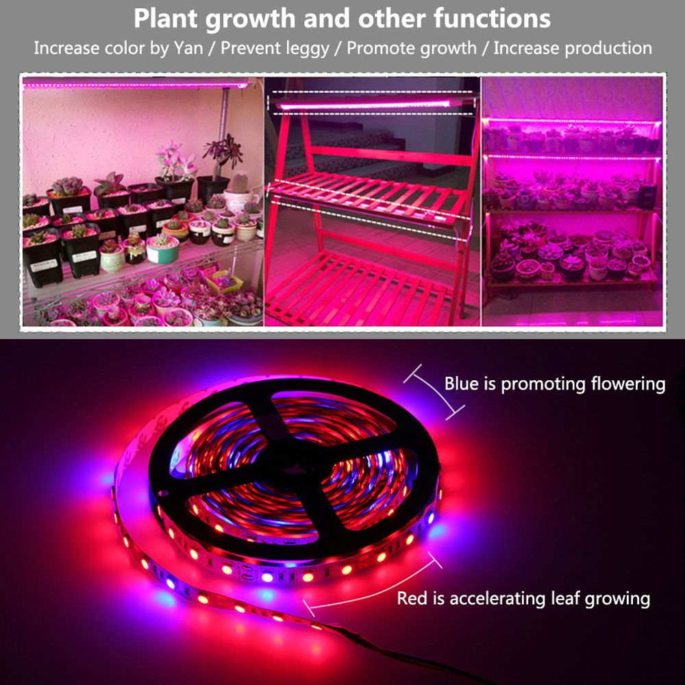 Led Grow Lights Dc12v Growing Led Strip Plant Growth Light Set With Adapter And Switch Specifications Grow Lights 1 Led Grow Lights Grow Lights Plant Growth