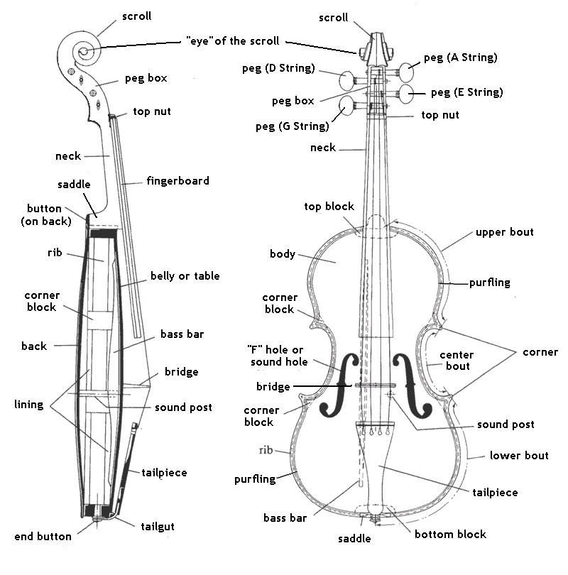 the parts of a violin  violin diagram