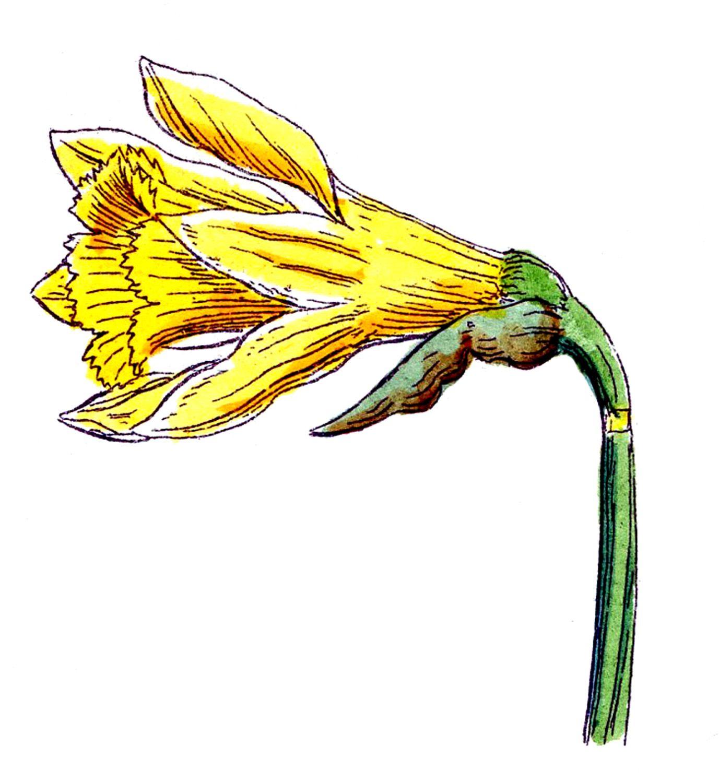Clip art of spring flowers botanicals graphics fairy spring