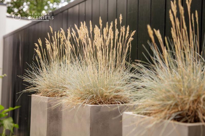 Pin Van Laurette Slegers Op Small Modern Garden Tuin Ideeen