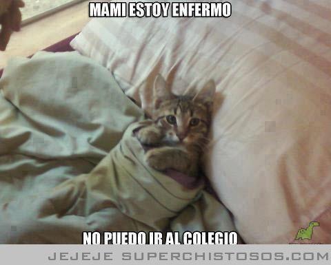 Mami Estoy Enfermo Gatos Chiste En Espanol Perros