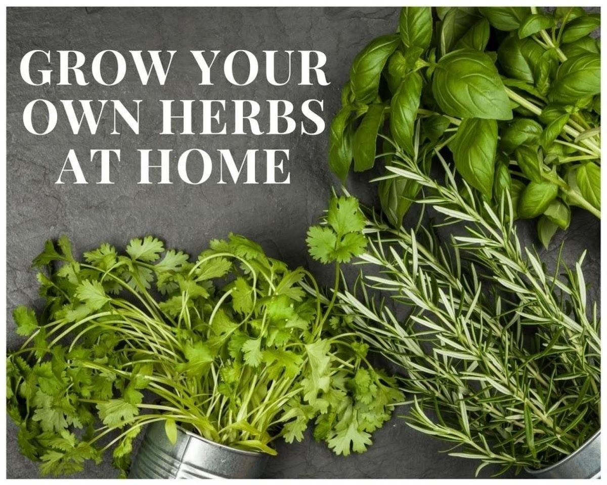 Grow Your Own Herbs At Home Herbs Garden Help