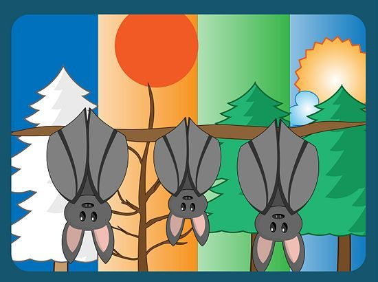 Get Rid Of Bats Getting Rid Of Bats How To Get How To Get Rid