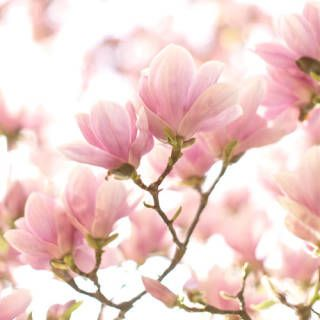The Right Flowers For Every Occasion And Feeling Magnolia Flower Flower Meanings Pretty Flowers