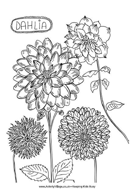 Dahlia Colouring Page Flower Coloring Pages Flower Drawing