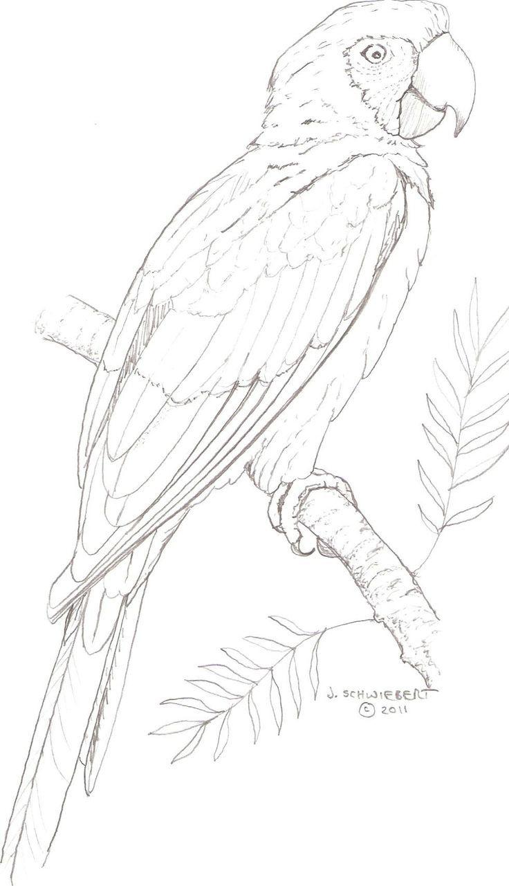 papegaai | graphisme | Pinterest | Zeichnen, Drachen zeichnen und Malen