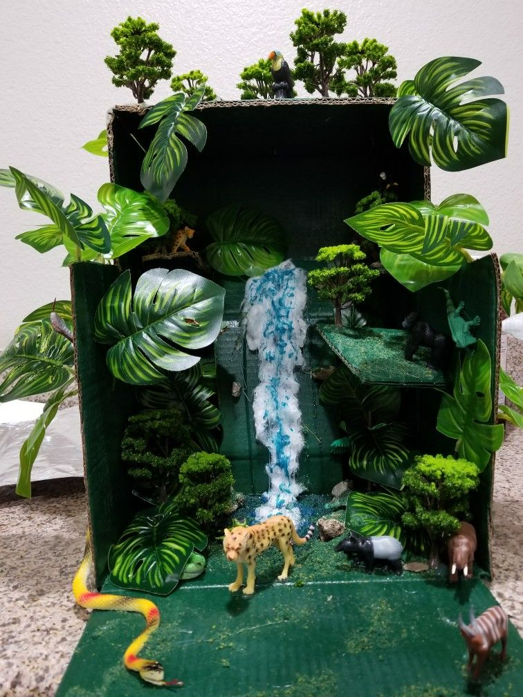 Tropical Rainforest Biome Project For Kids I Ordered