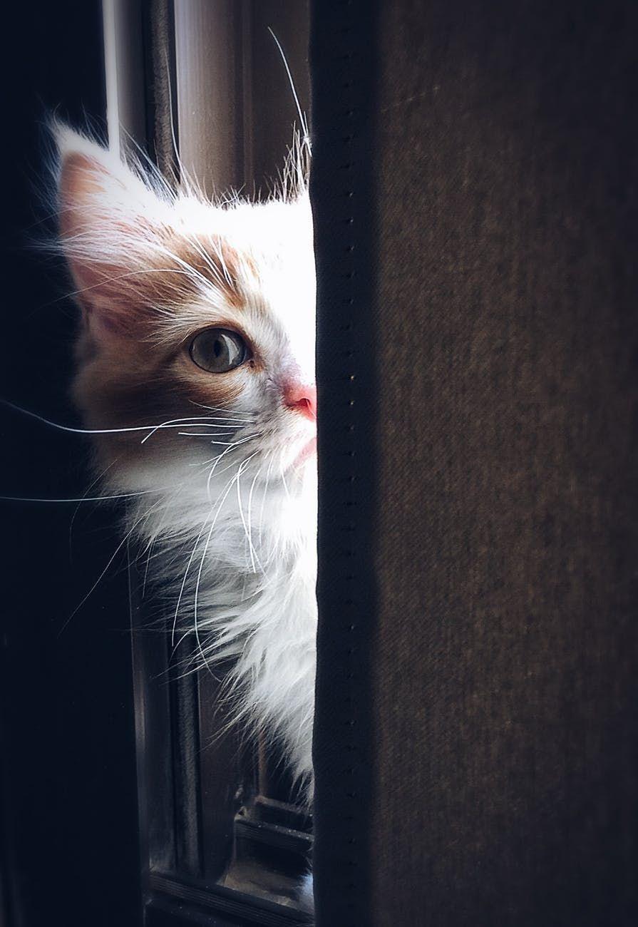 Young Cat Peeking Around The Corner 3 Peek Kitty Cat Care Cats Pets Cats