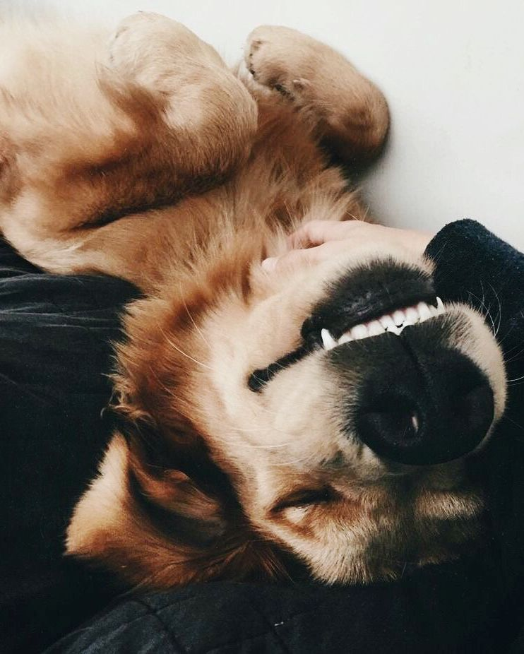 Pin By The Oregonianoregonlive On Too Cute Pinterest Dogs
