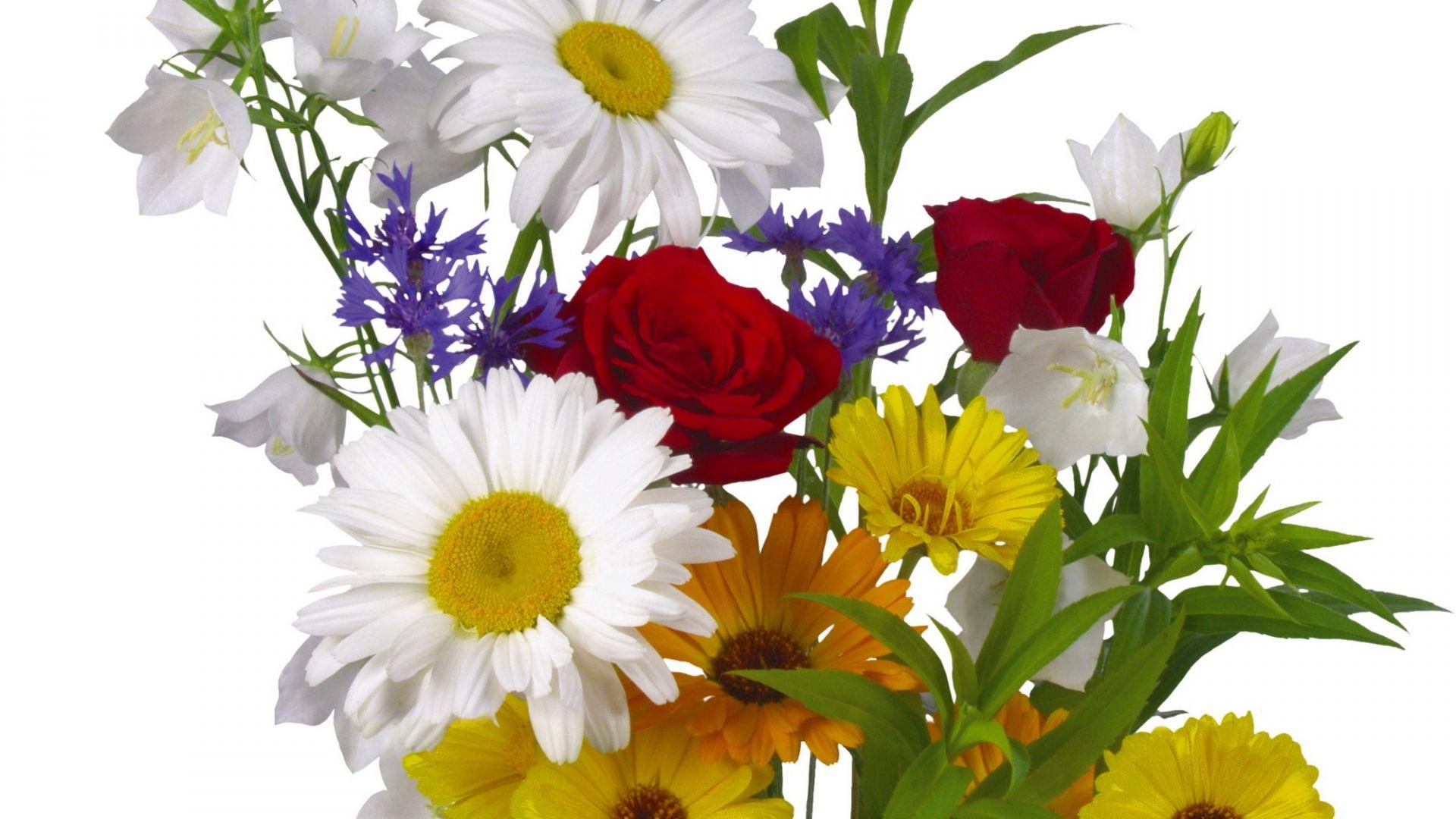 roses, daisies, gerberas - http://www.wallpapers4u.org/roses-daisies-gerberas/