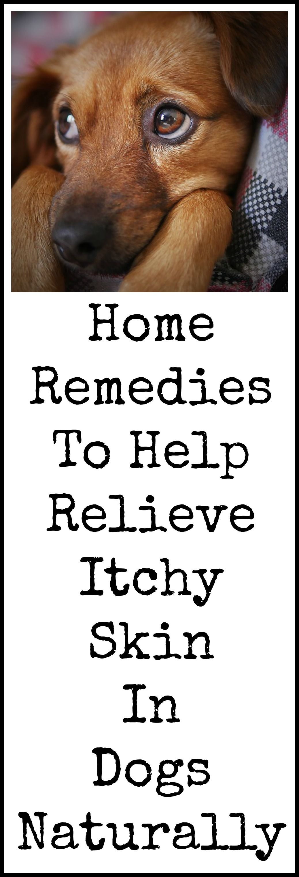 Dog itch relief home remedies natural cough remedies