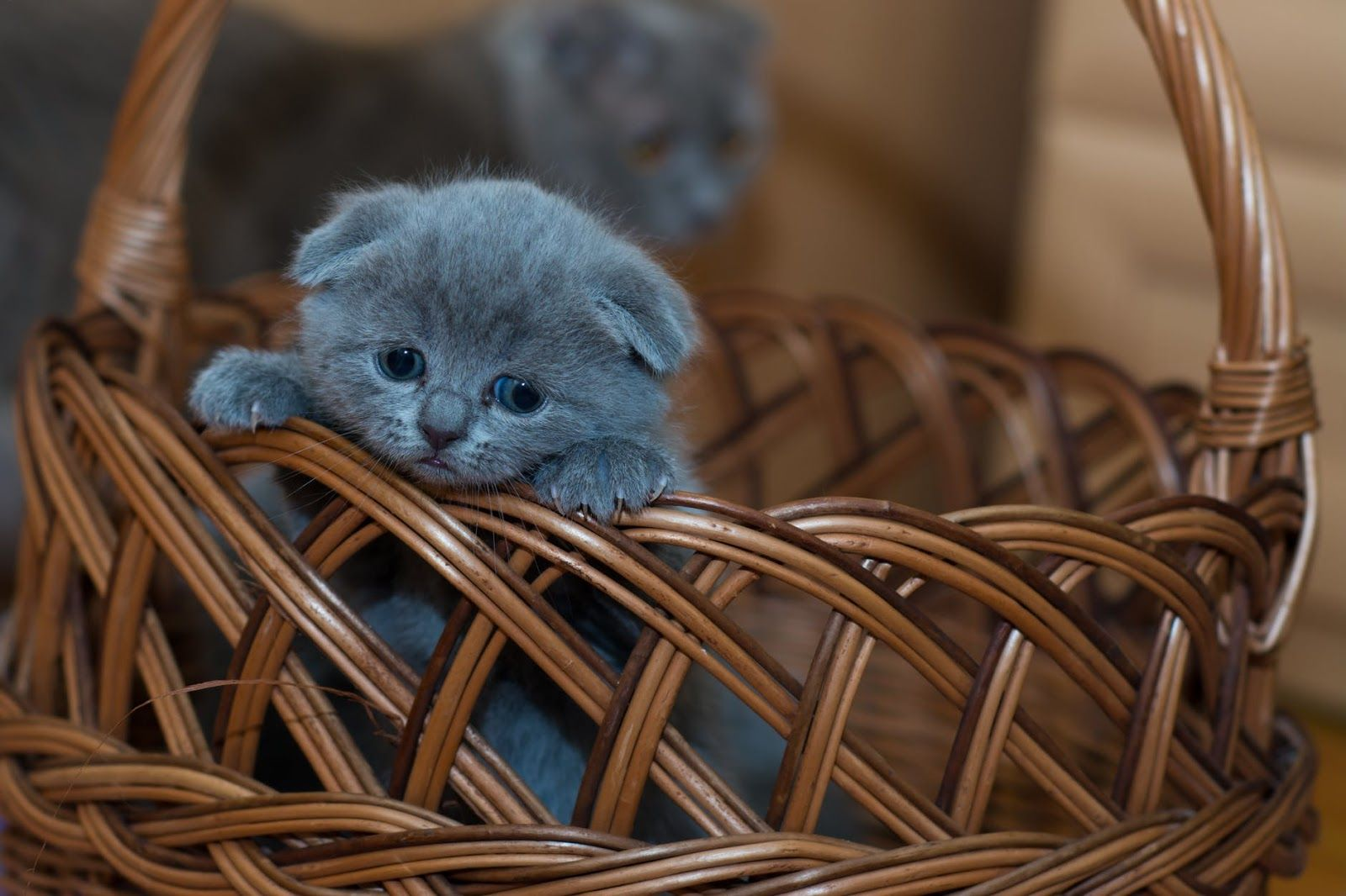 Sweet Unique Attractive Images Pics Pictures Hd Wallpapper For Whatsapp Dp Profile Cat Care Kittens Cutest Cat Lovers