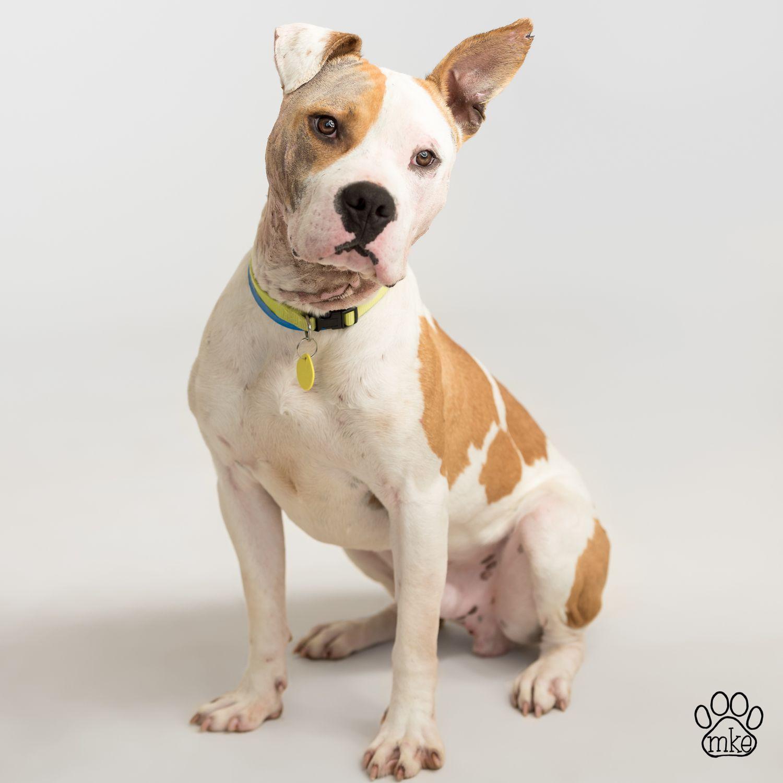 This Week At The Wisconsin Humane Society May 17th 2016 Dog