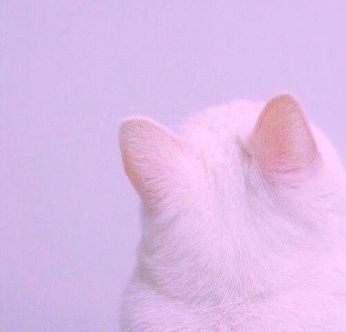 Dreamy Pastel Cat Cat Aesthetic Purple Aesthetic Pink Cat