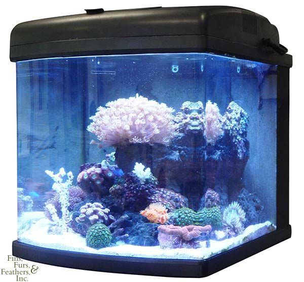 Jbj 28 Gallon Nano Cube Led Aquarium 89 Watt Advanced Marine Depot Aquarium Coral Fish Tank Reef Aquarium